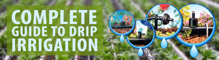 Complete Guide to Drip Irrigation